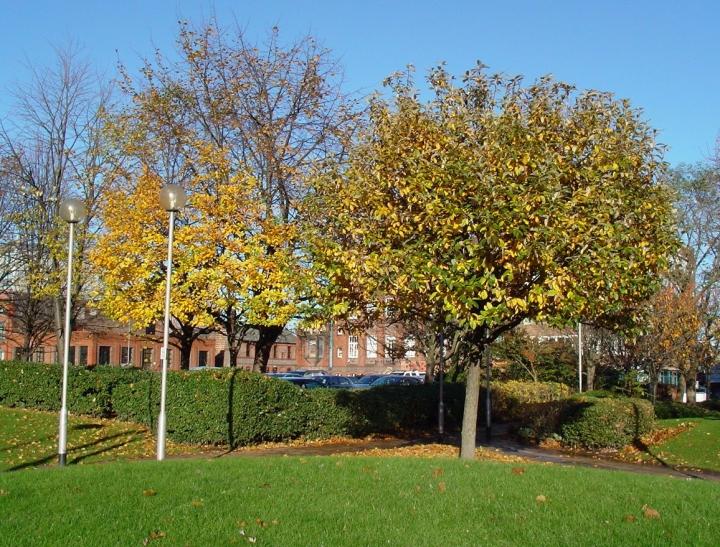 Bixteth_Street_Gardens_in_Autumn_(1)